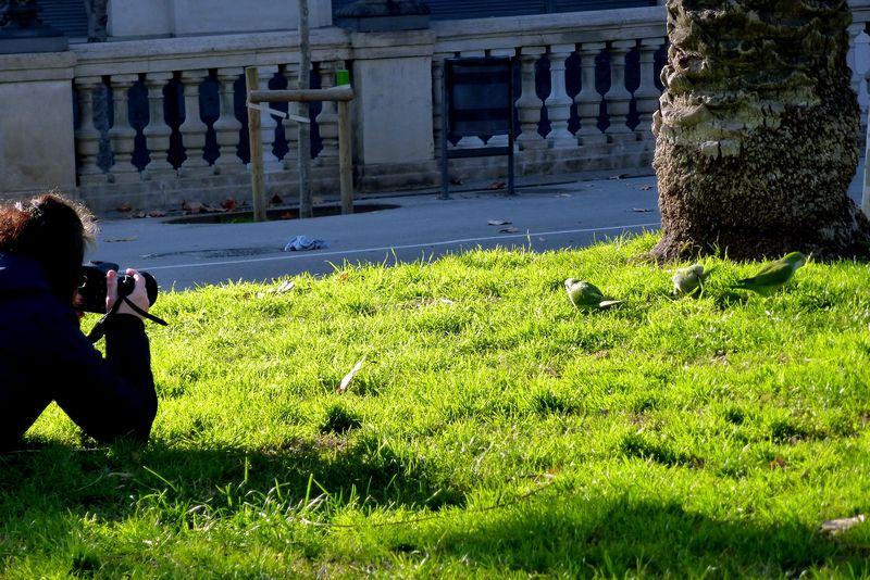 les perruches de Barcelone