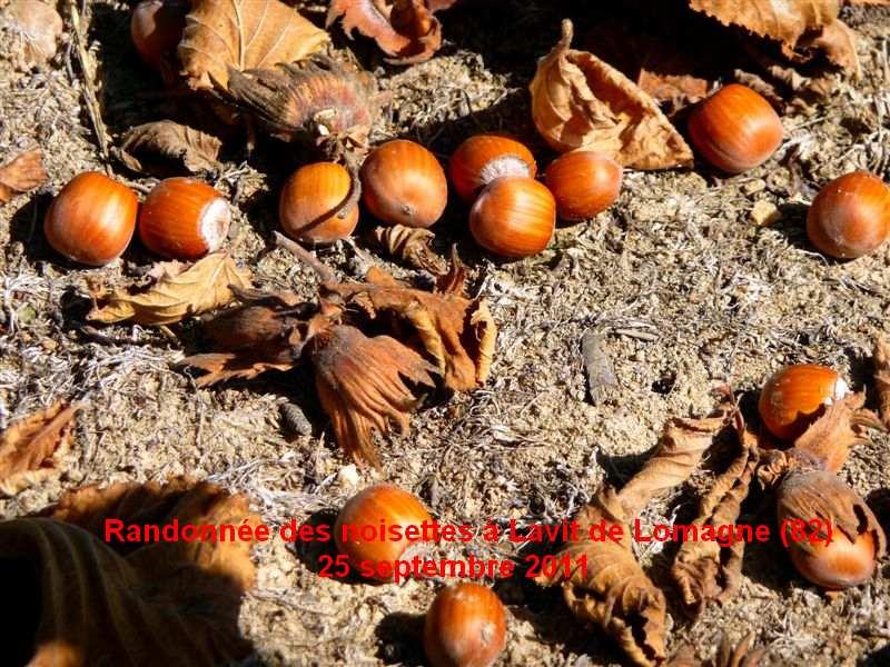 Randonnée des Noisettes à Lavit de Lomagne 25 septembre 2011